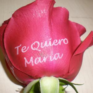 rosa tatuada 7
